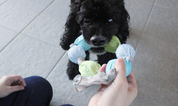 引っ張りっこをしている中型犬の写真