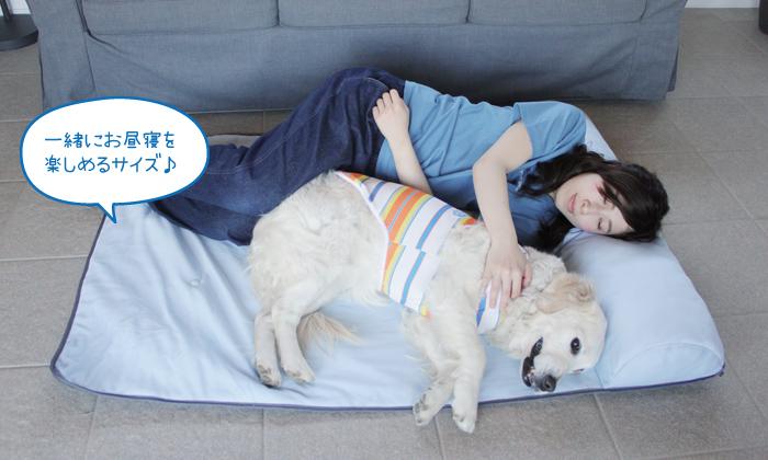 ゴールデンと女性がLLサイズの上で一緒にお昼寝している写真