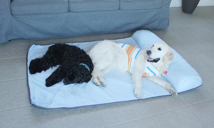 アメリカンコッカーとゴールデンがLLサイズで寝ている写真