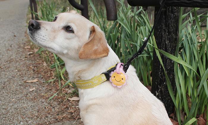 Sヒマワリを使っているミックス犬の写真