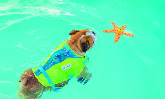水の中で犬が遊ぶ写真