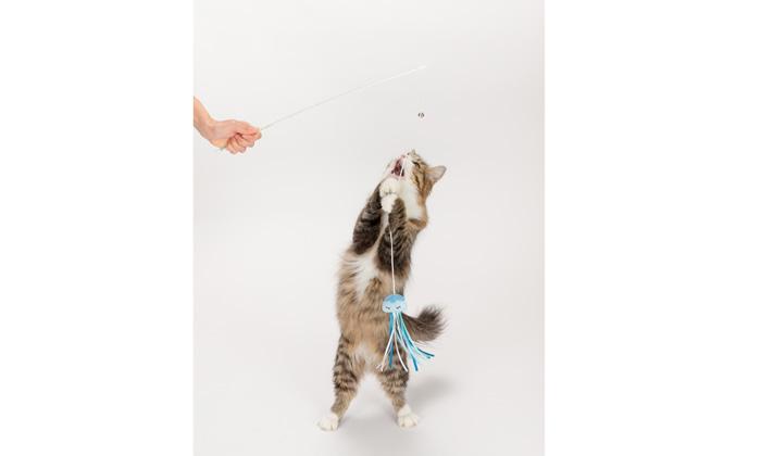 ネコが遊ぶ写真