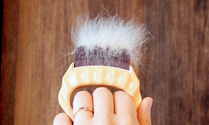 くし歯にたまった抜け毛の写真