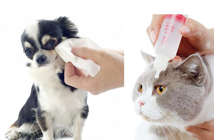 犬と猫の目に点眼している写真