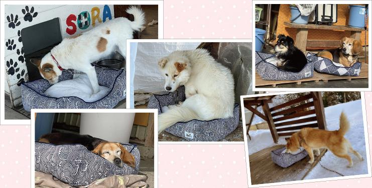 冬の支援は、リバーシブルベッド。真冬を迎える前に、犬用のお洋服や、マット、ベッドなど5商品をご提案し、その中から底冷えを防ぎ、暖かく過ごさせたいと、ベッドが選ばれました。