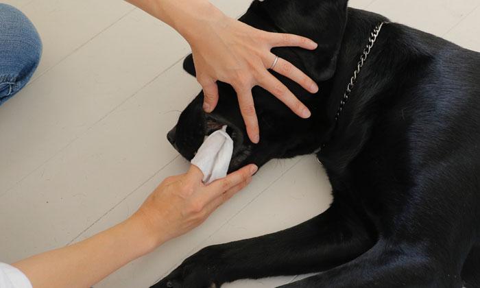 犬の歯磨き写真