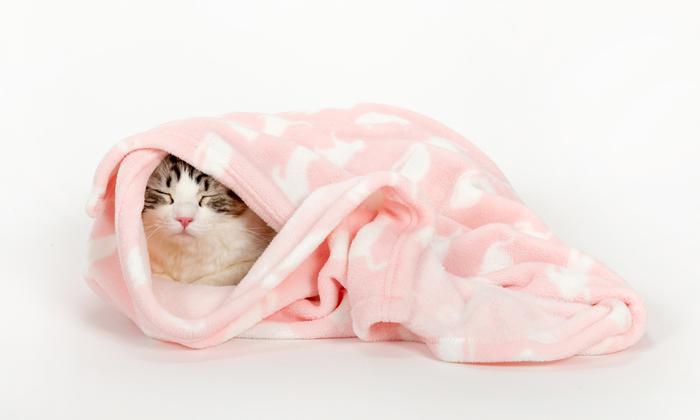 ネコがブランケットにくるまっている写真