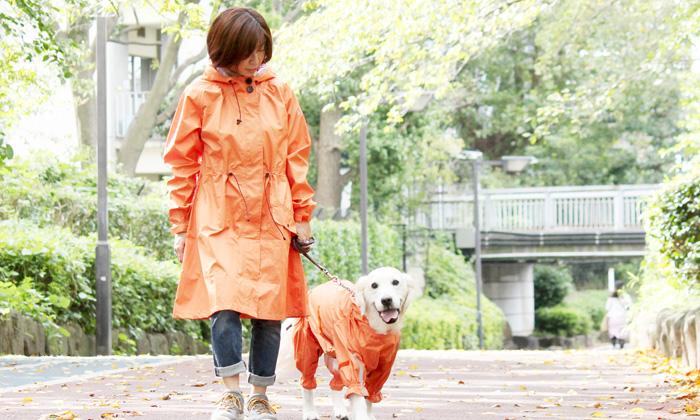犬と散歩写真