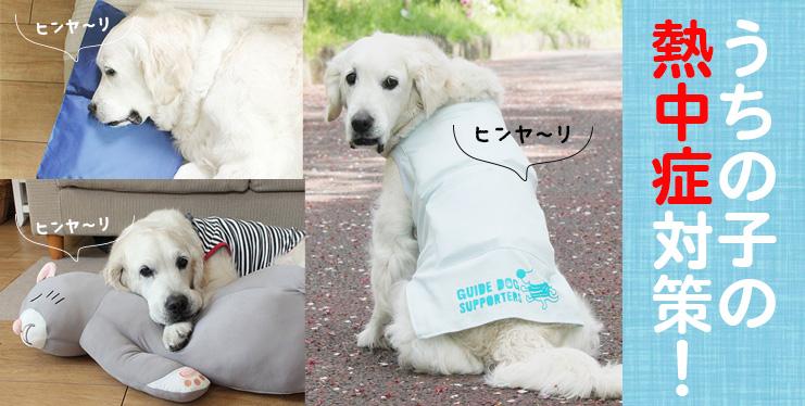 愛犬の暑さ対策グッズ