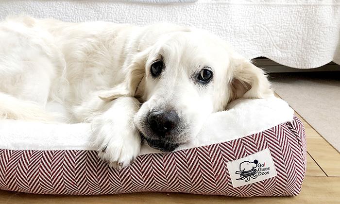 大型犬がベッドで寝ている写真