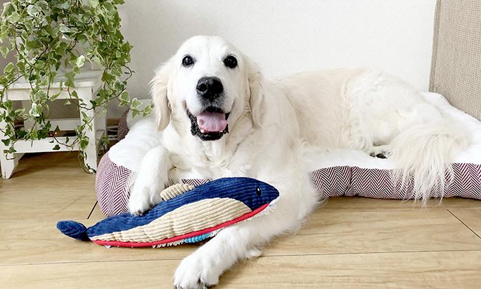 大型犬が遊ぶ写真