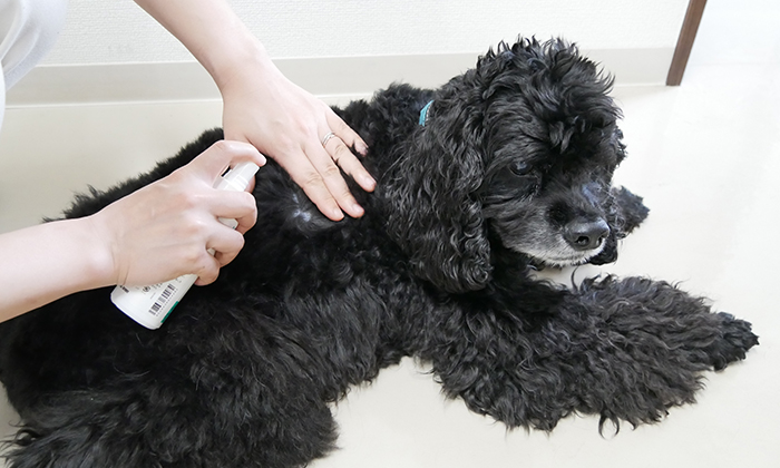 犬の肌にスプレーしている写真