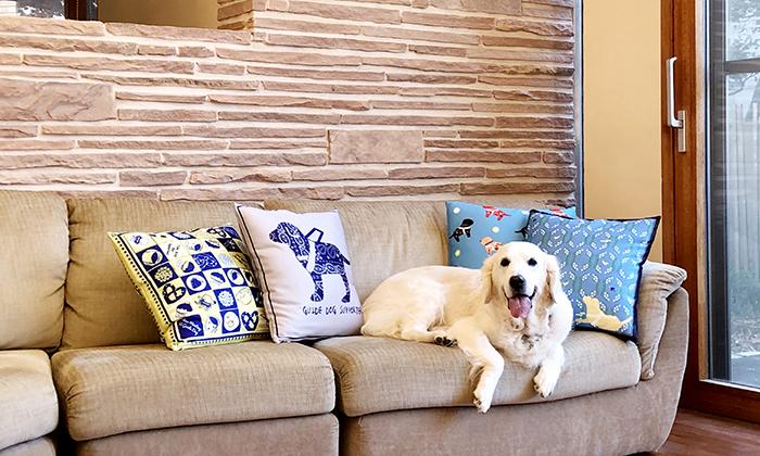 4種のクッションが飾られたソファーとそこに座るゴールデン・レトリーバー