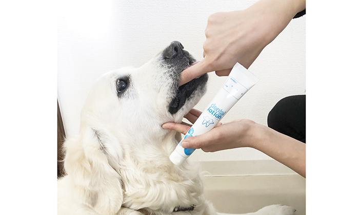 乳酸菌の歯磨きジェルを使用しているゴールデンレトリーバーの写真