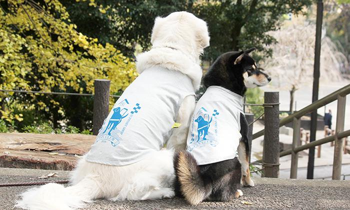 ファンクラブ犬用Tシャツを着て、並んで座っているゴールデンと柴犬