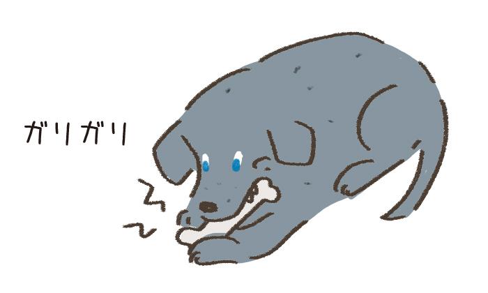 かたい骨をかじる犬のイラスト