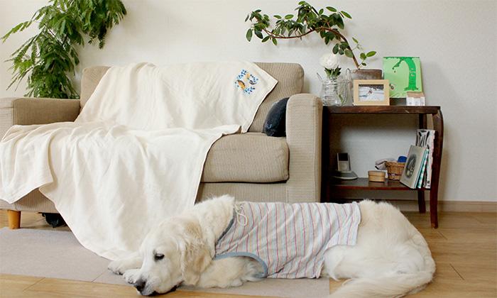 ソファーにガーゼケットをかけた写真