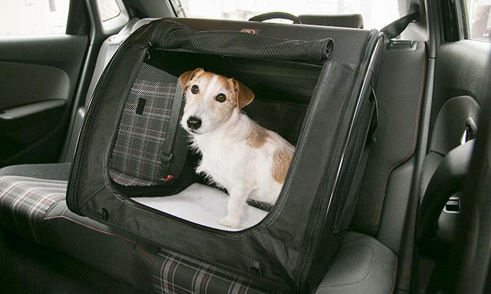 小型犬をポータブルケージに入れて、車の後部座席に固定した写真