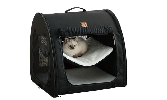 固定されたハンモックに乗る猫写真