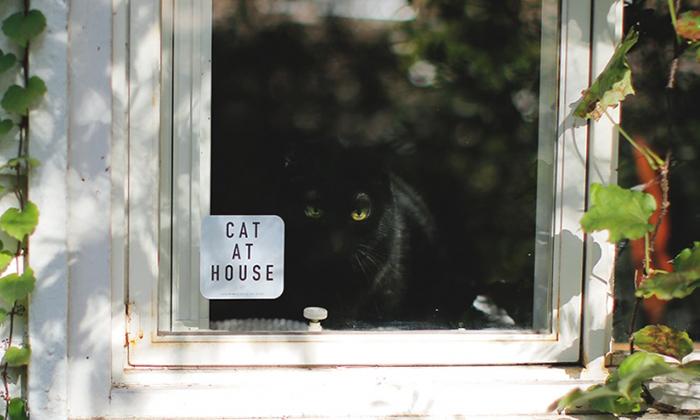 家の窓に貼った写真