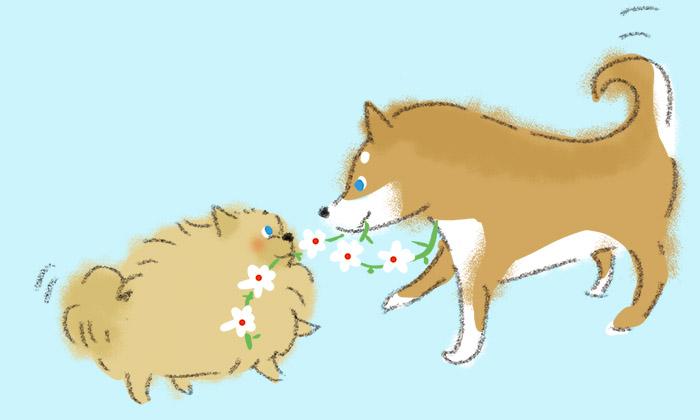 ポメラニアンと柴犬のイラスト