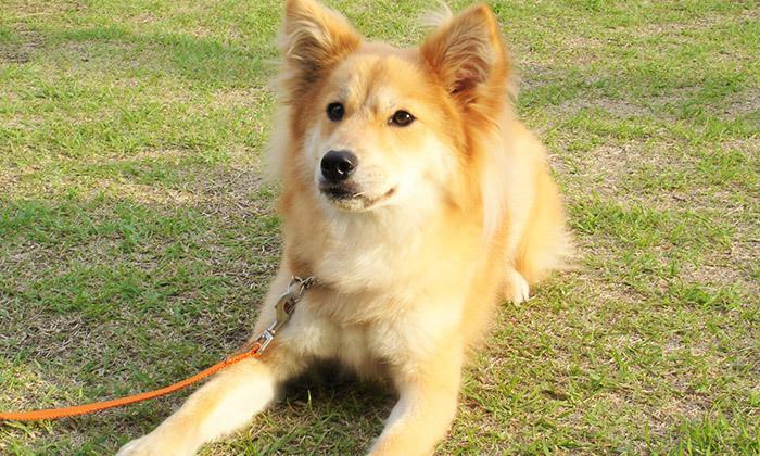 聴導犬の写真