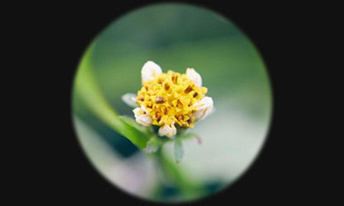 拡大された花のイメージ写真