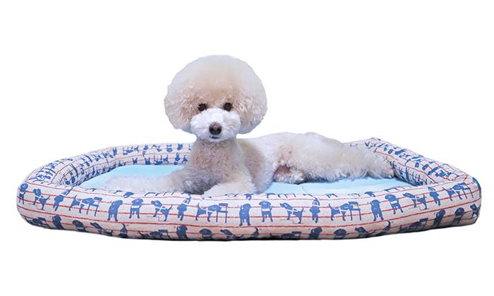 ベッドにいるモデル犬
