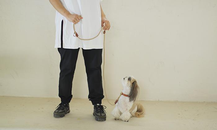 小型犬と歩く写真