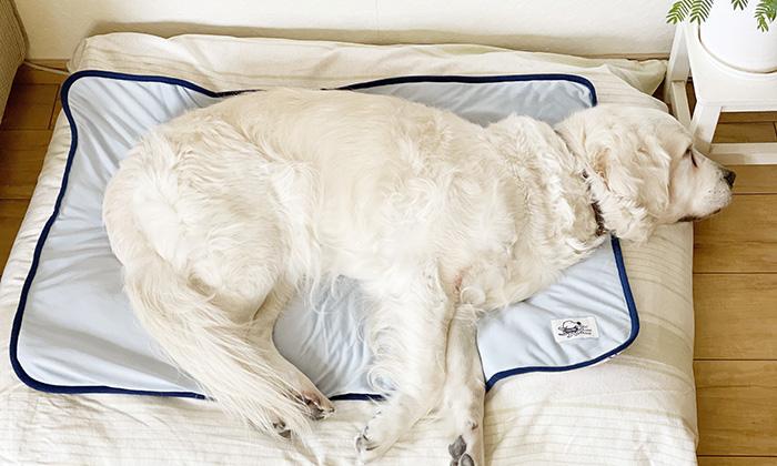 接触冷感側で寝るモデル犬