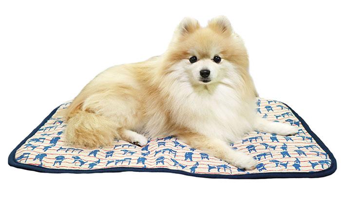 マットにいるモデル犬