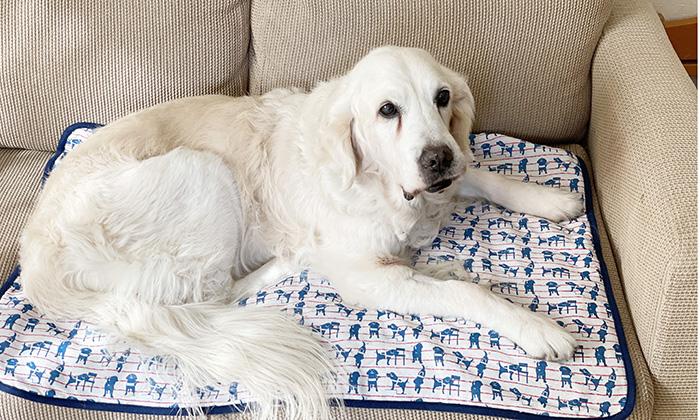 ソファーにしいたマットにすわるモデル犬