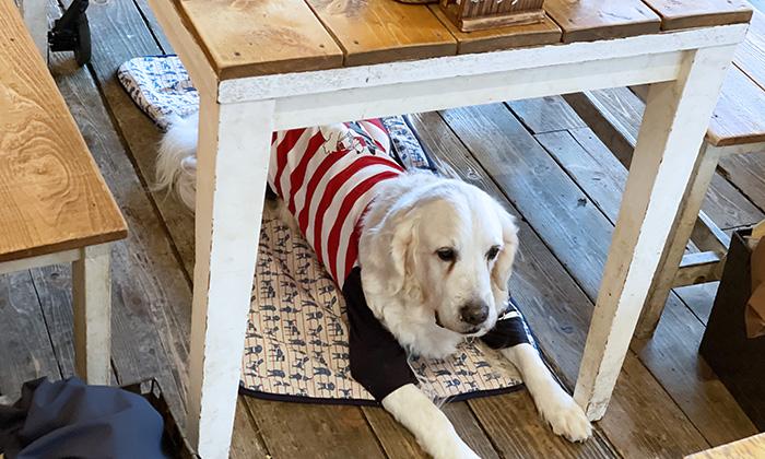 テーブルの下に敷いたマットの上にいるモデル犬