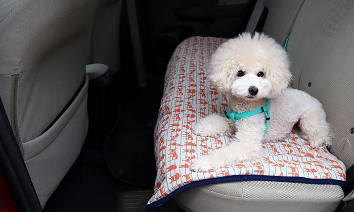 後部座席しったマットの上にいるモデル犬