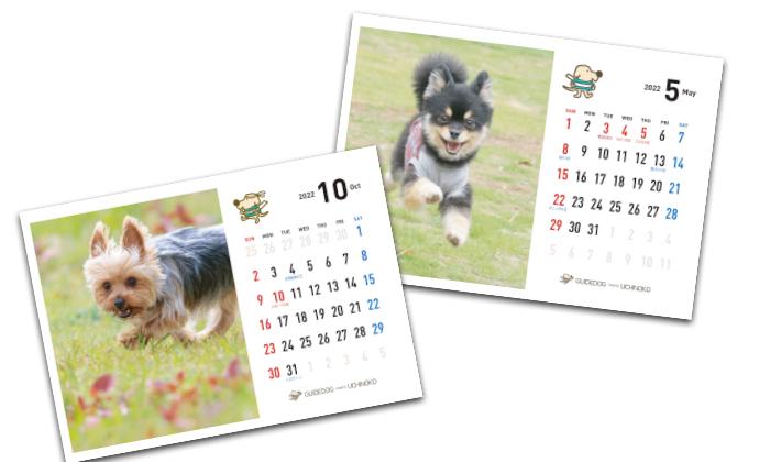 我が家の可愛い犬や猫の写真で作った卓上カレンダー