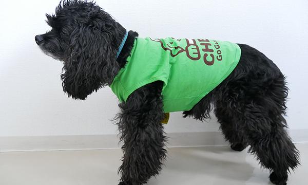 黒の犬が緑のワンT6号を着用している写真