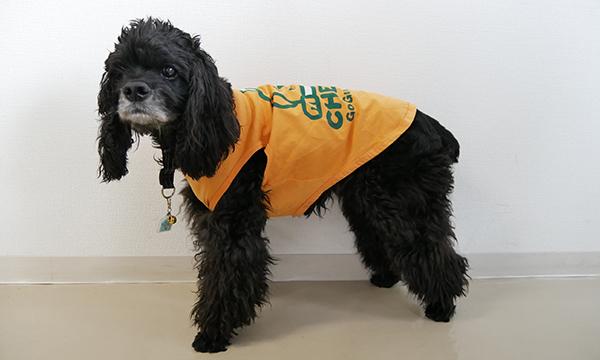 黒の犬が緑のワンT7号を着用している写真